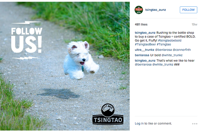 A pic of 'Fluffy', encouraging users to follow the Instagram account.